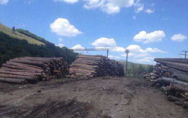 Луценко заявил о десятках обысков в лесхозах Львовской области