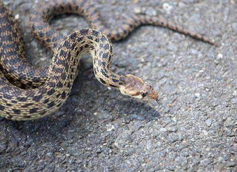 На Львовщине на 9-летнего мальчика на его собственном дворе напала змея