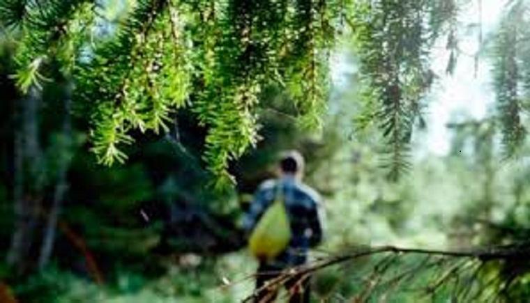На Львовщине пятый день ищут работника туристической базы, который исчез в лесу