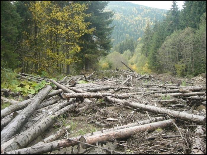 Как лесники и пограничники прикрывают вырубку леса на границе с Украиной