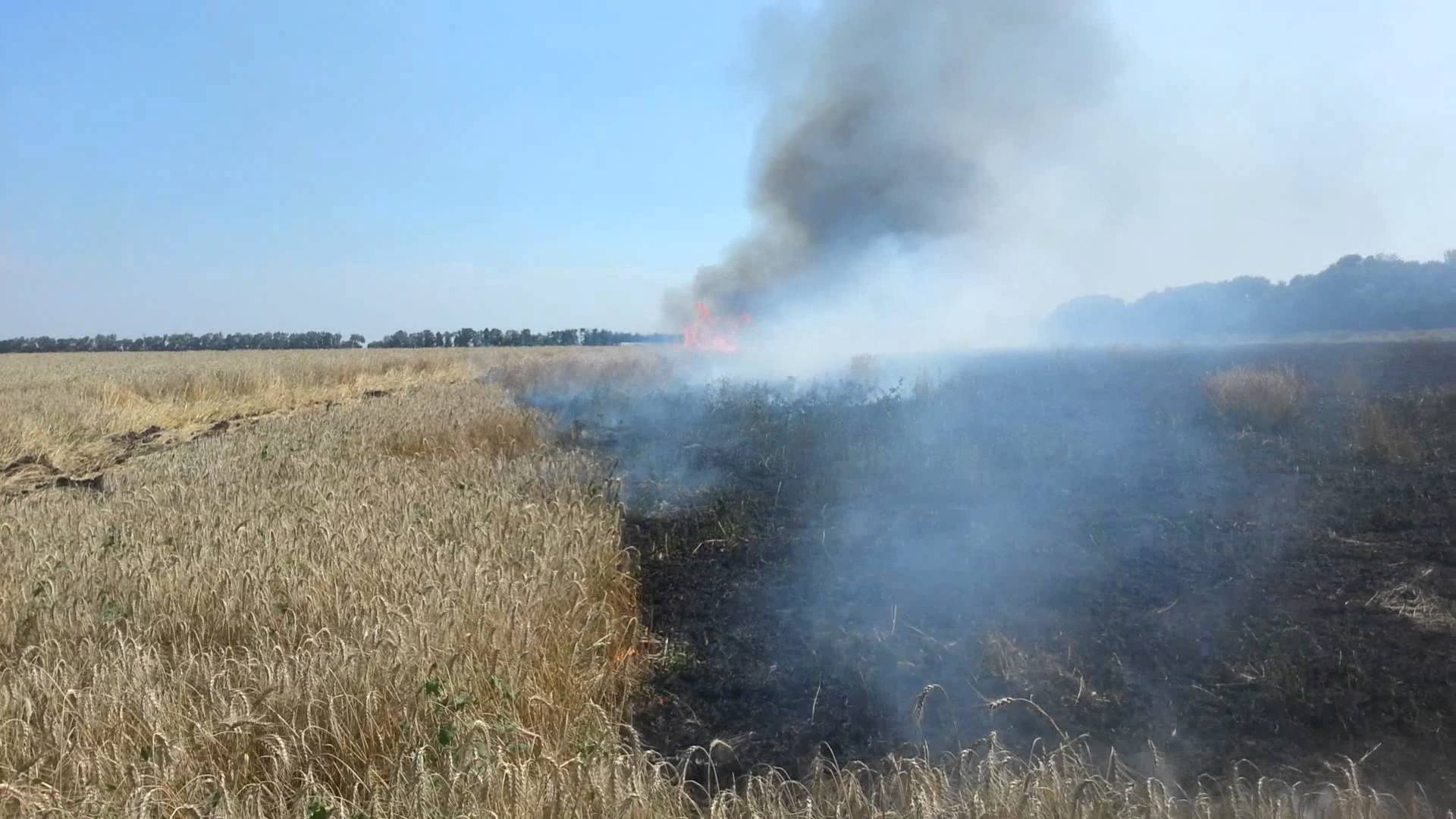 Во Львовской обл. сгорело почти 35 гектаров пшеницы