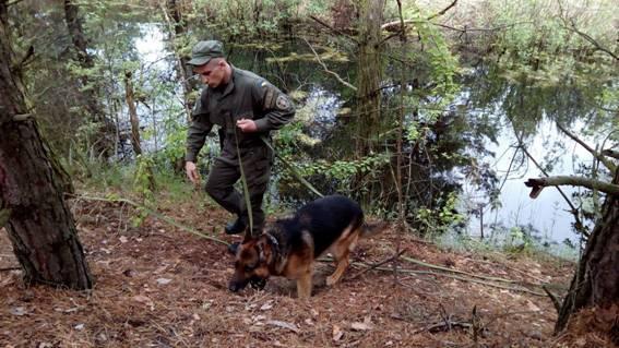 Мужчина убил в лесу бабушку, с которой не поделил чернику