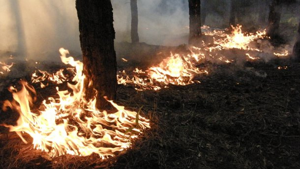 Людям строго запретили ходить в лес на Днепровщине из-за жары