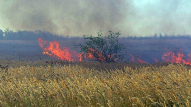 На Луганщине горит лес: ужасные последствия (ФОТО)