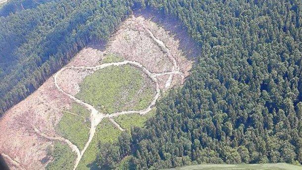 Ужасающие масштабы «экоцида» Карпат