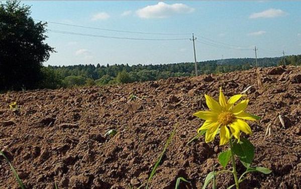 На Хмельниччине чиновник отдал в аренду сыну 73 га государственной земли