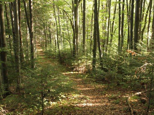На Львовщине уже шестой день разыскивают мужчину, который ушел в лес и не вернулся