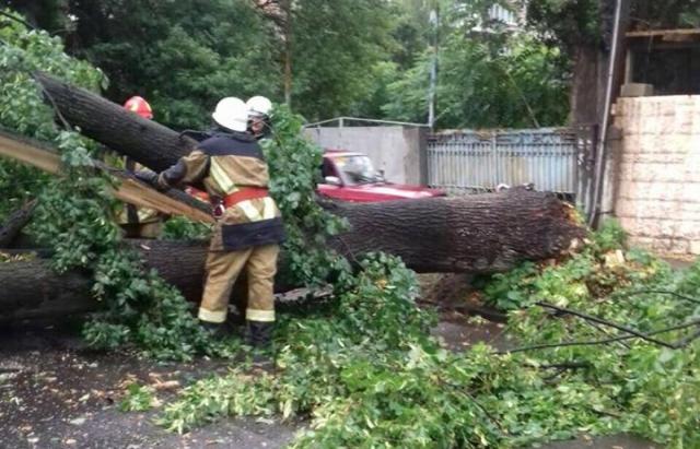 Последствия урагана в Ужгороде: поваленные деревья, раздавленные авто и поврежденные коммуникации на столбах (ФОТО)