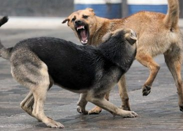 Во Львове бездомные собаки напали на девушку (Фото)