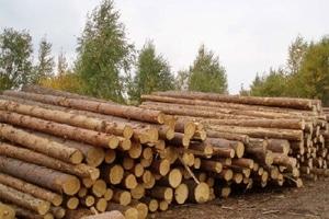 Вырубка леса в обмен на помощь: стало известно об ультиматуме ЕС