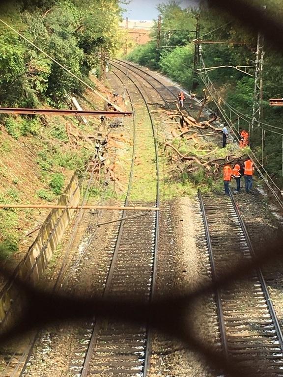 Во Франции поезд врезался в дерево: десятки пострадавших (ФОТО)
