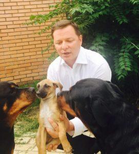 79ccb3b-liashko-dogs7