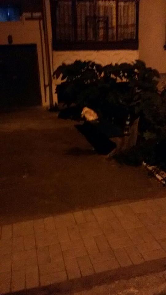Журналистка взбудоражила сети сообщением о диком убийстве в Украине