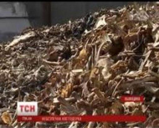 Ситуация на костедробительном заводе Львовщины шокировала всю страну