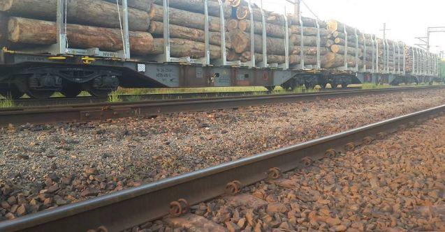 На Закарпатье 19 чиновников наказали за незаконную вырубку леса