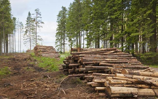 Журналисты разоблачили циничную схему массовой вырубки леса на 20 миллионов гривен