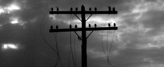 Нет света – лови вора. На Львовщине разворовывают провода с высоковольтных линий