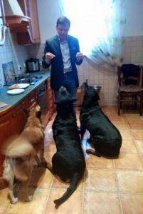 d6c59f7-liashko-dogs1