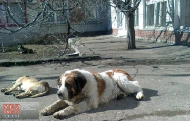 Трогательная история про одесского Хатико: пес ждал хозяина 10 лет