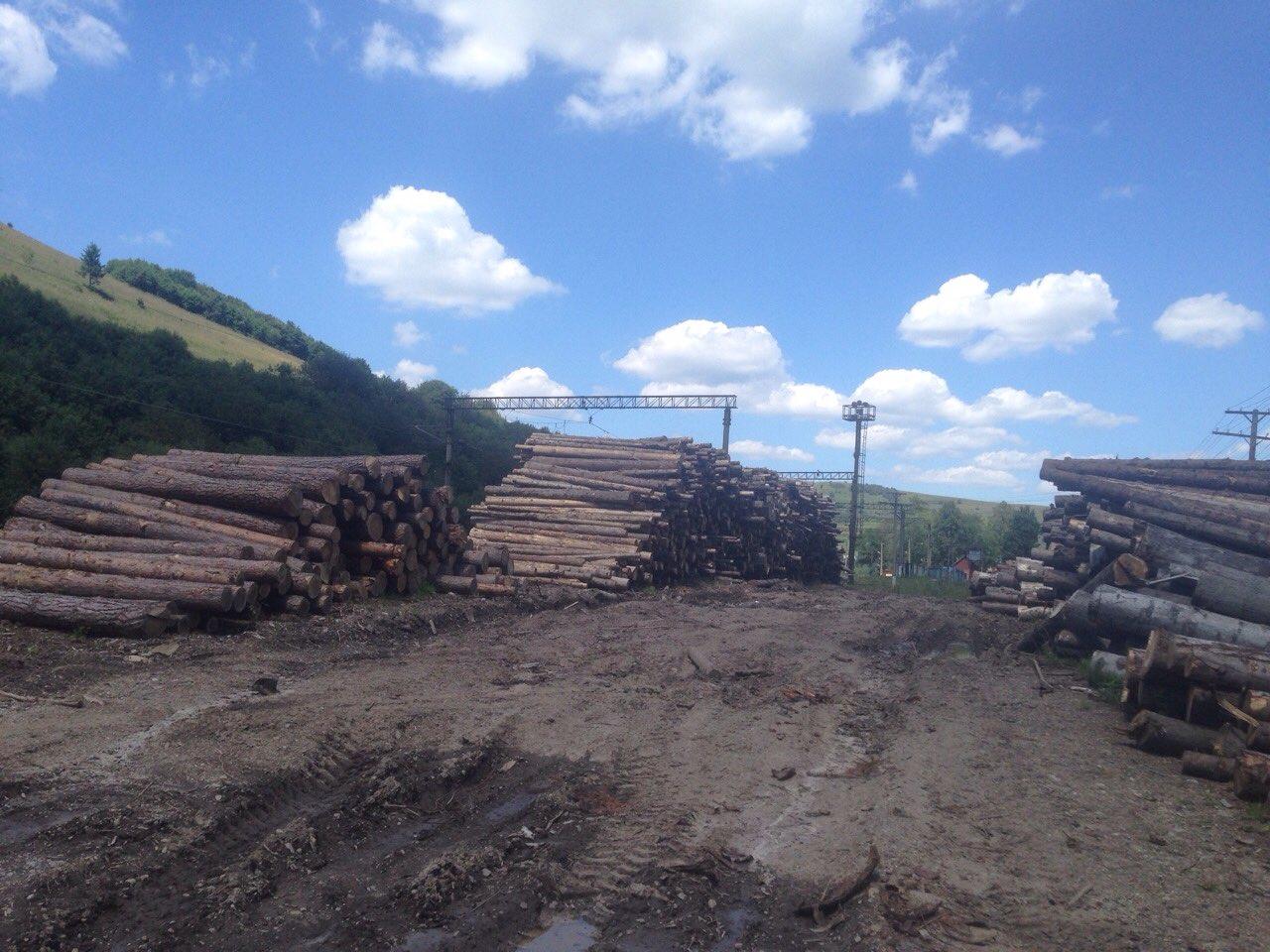 Правоохранители разоблачили схемы легализации лесоматериалов на сумму свыше 45 млн грн