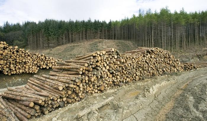 Спасти украинский лес: страна на пороге экологической катастрофы