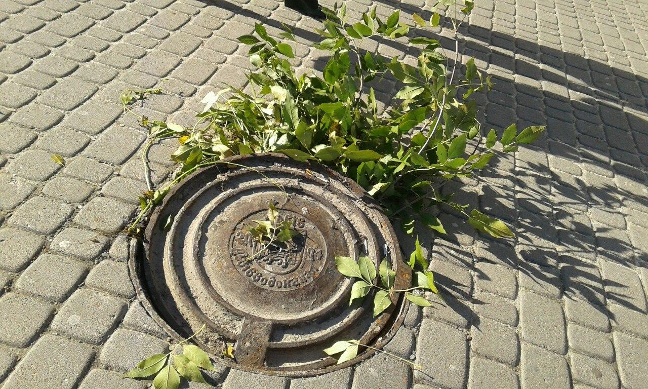 Львовские рагули: вот такой «замечательный люк» находится возле львовской школы