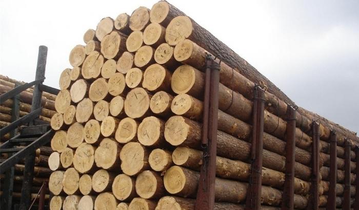 Раде предложили отменить мораторий на продажу леса
