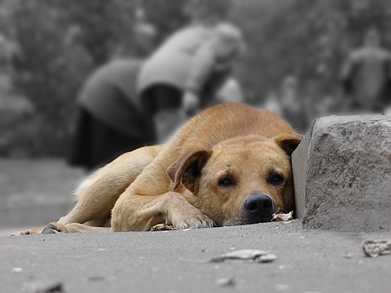 Во Львове начали массово травить собак