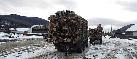 Кто стоит за незаконными вырубками украинских лесов