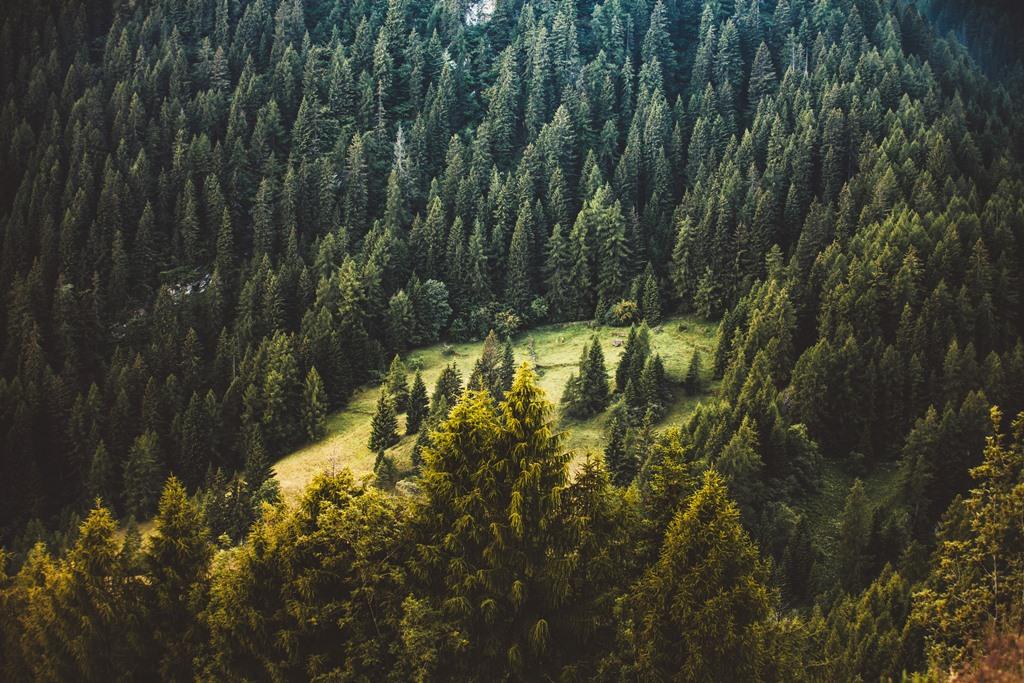 СРОЧНО!!! Украинцев призывают поддержать петицию чтобы немедленно остановить вырубку лесов в Карпатах