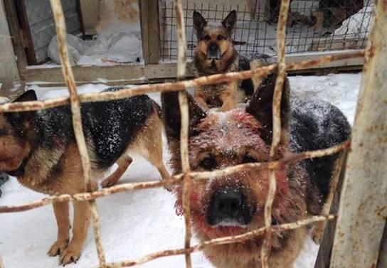 На Рождество собаки загрызли насмерть и разорвали участника АТО. У него осталось двое детей и женщина-инвалид