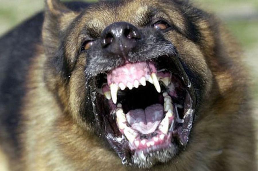 «Одни кости остались»: Родственница убитого собаками участника АТО рассказала жуткие подробности его смерти (ВИДЕО) Людям со слабыми нервами не читать
