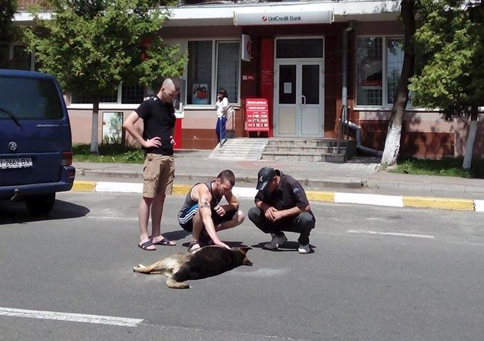 Осторожно! Во Львове владельцы животных бьют тревогу: домашних любимцев травят прямо на улицах города
