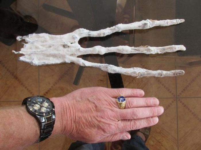 Что это такое?: ученые поражены внезапной находкой неизвестного существа (ФОТО, ВИДЕО)