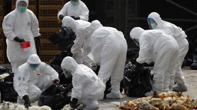 Срочно: Тернопольщину все больше охватывает эпидемия птичьего гриппа, врачи бьют тревогу