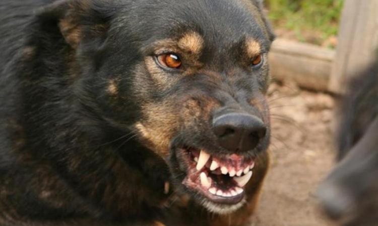 От них не спастись: в Киеве собаки массово нападали на людей, среди пострадавших 16-летняя девушка