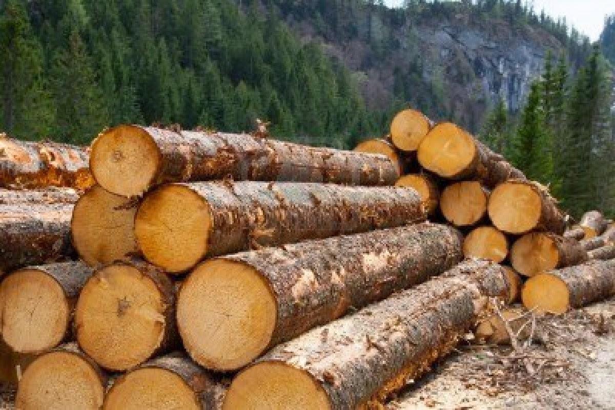 Украина отменит экспорт древесины, чтобы получить 600 млн евро