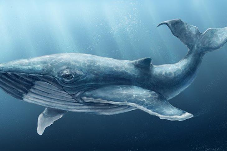 Новая жертва «Синего кита» в Суммах