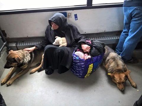 «Чище, чем некоторые люди»: фото бродячих собак в маршрутке Львова взбудоражило сеть