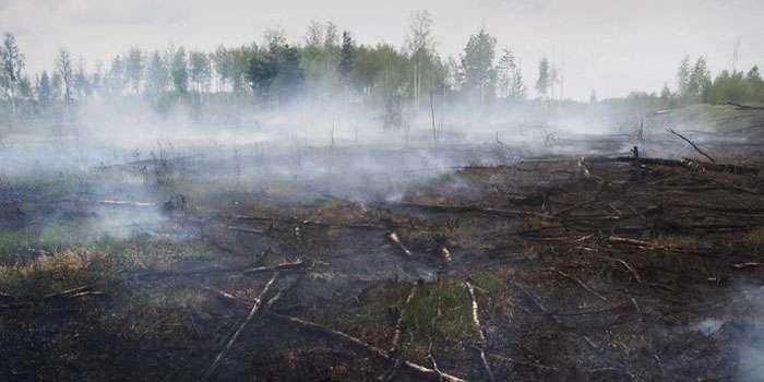 СРОЧНО!!! Во Львове нереальными масштабами горит парк, взрывы слышны на весь город (ФОТО)