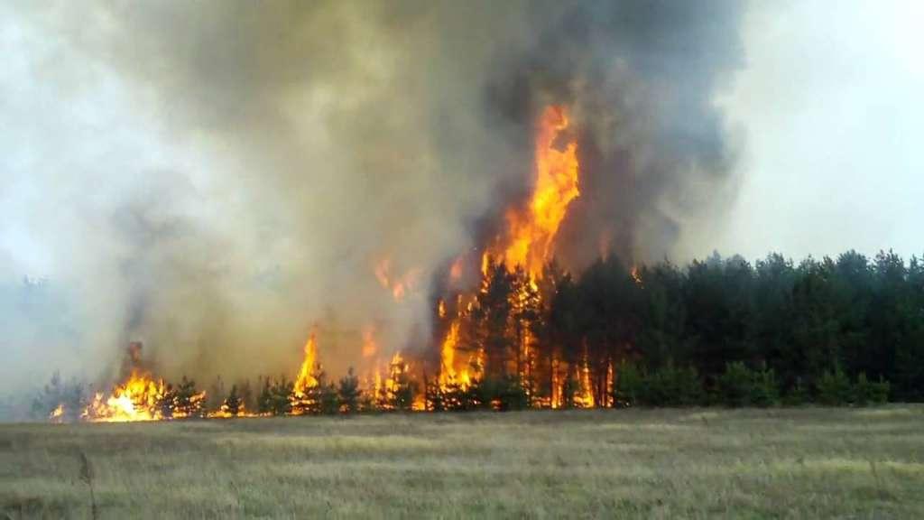 СРОЧНО!!! Под Львовом страшный пожар, лес горит с нереальной скоростью