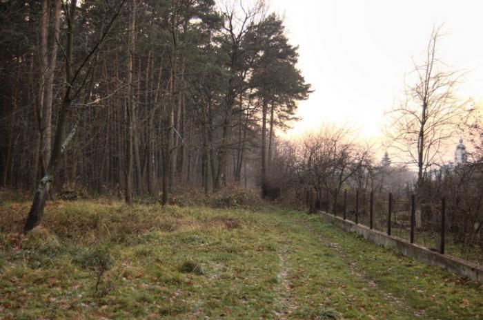 Прогулка в лесу в Львове: Многочисленные ранения в результате выстрела получил 18-летний юноша