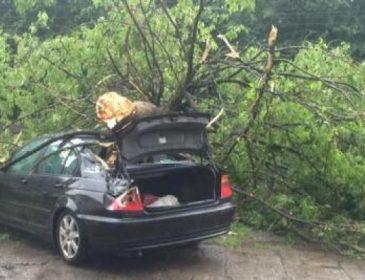 Шокирующие последствия непогоды во Львове: повалены деревья, оборваны провода! Вы потеряете дар речи! (ФОТО)