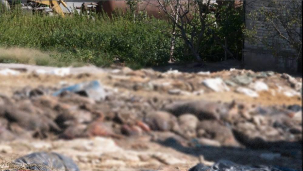 Как тут жить? Во Львове под открытым небом гниют трупы животных. Шокирующие фото, от которых мурашки по телу