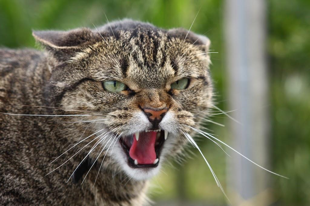 Вот вам и домашний любимец!!! Кошка убила свою кормилицу, от адских страданий этой женщины мороз по коже