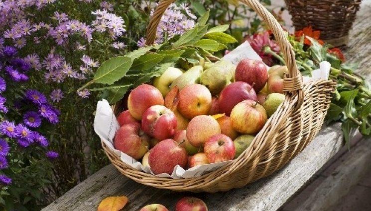 Сегодня Яблочный Спас — что нужно сделать в этот великий праздник, чтобы не лить до конца жизни слезы и уберечься от крупнейшего бедствия в жизни христианина
