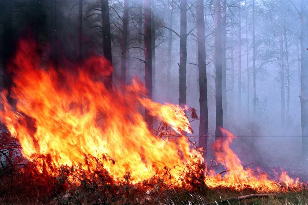 «Весь район затянуло черным едким дымом» В Киеве масштабный пожар, горит … Детали шокируют
