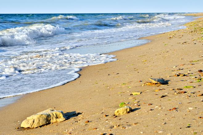Там кости и ужасный запах! Жуткое зрелище на побережье под Одессой