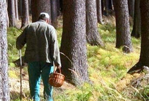 «Два дня рядом с мертвым другом…»: Мужчины просто пошли собирать грибы. История, от которой мурашки по телу