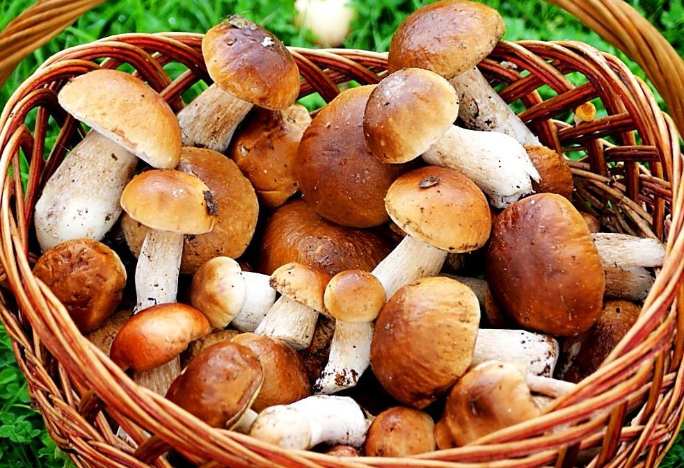 Сами наелись, еще и ребенок отравился!!! В Тернополе четыре человека отравились грибами, это уже переходит все границы